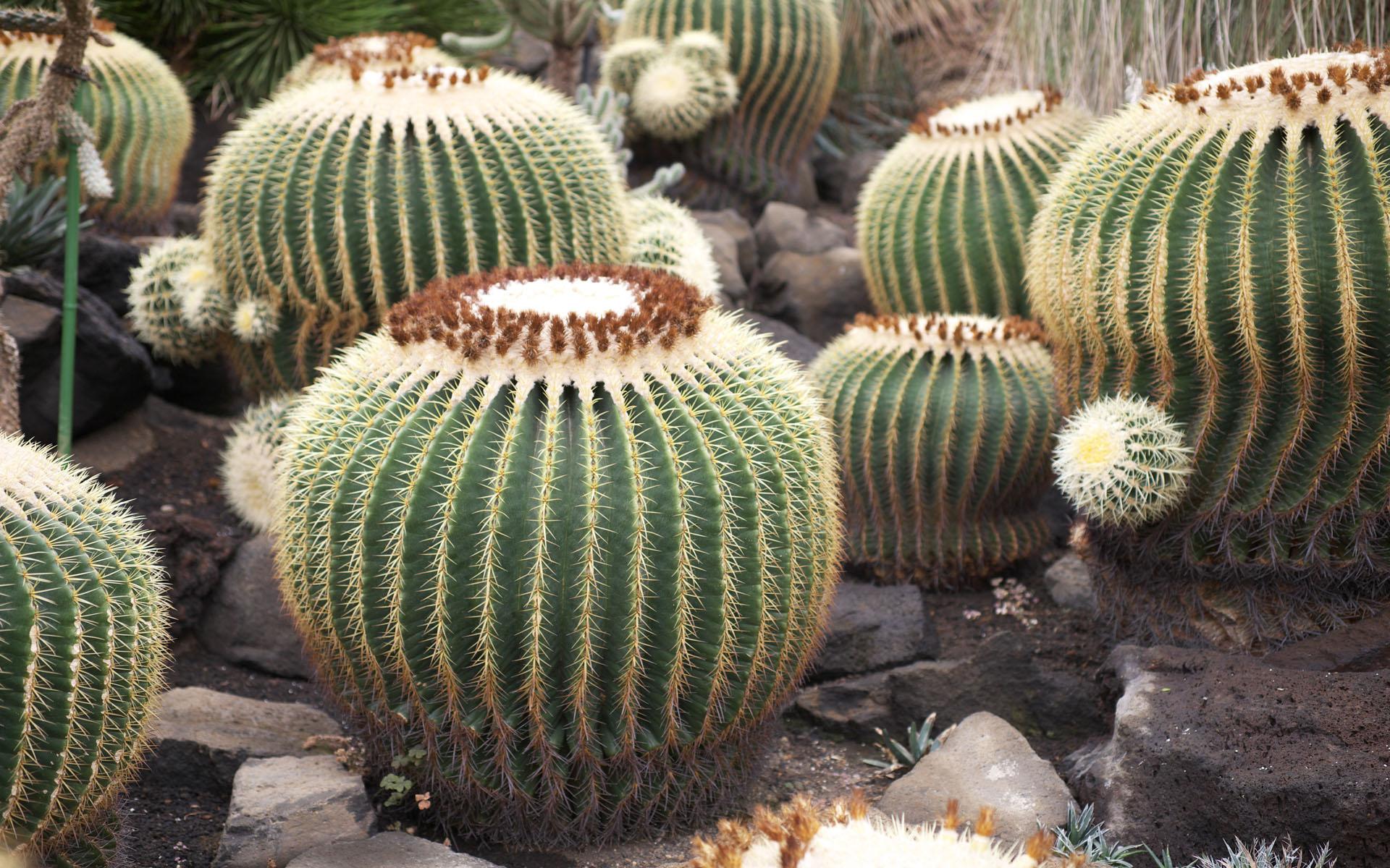 Nunc vitae ipsum turpis.